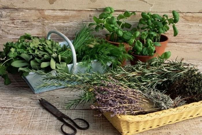 Травяная подушка от всех болезней! Какие травы нужно использовать