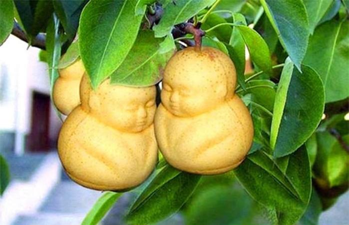 Китайские овощи и фрукты удивительной формы