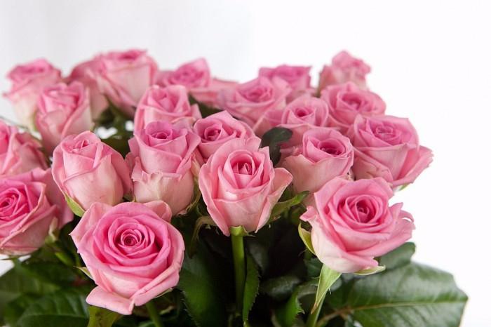 rozi-foto-01-e1418378521692 (700x466, 243Kb)
