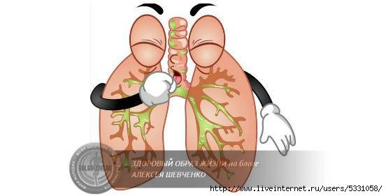 легкие кашляющего астматика (552x281, 60Kb)