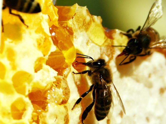 Картинки по запросу юный пчеловод уфа