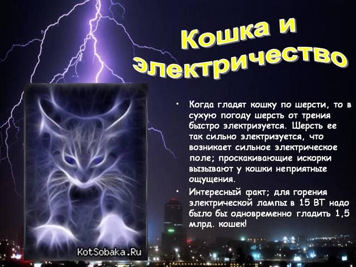5000218_0011011Koshkaielektrichestvo (700x525, 59Kb)