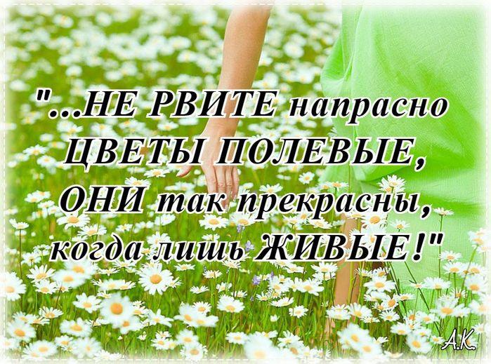 5227673_10221 (700x519, 106Kb)