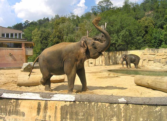 зоопарк в праге фото 3 - копия (700x507, 551Kb)