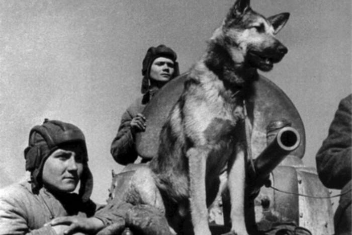 Джульбарс, Хатико и другие самые известные собаки в истории