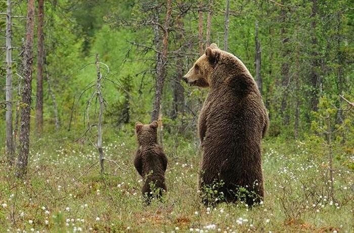 Пушистые мамочки и папочки, которые ведут себя совсем как люди со своими детьми!