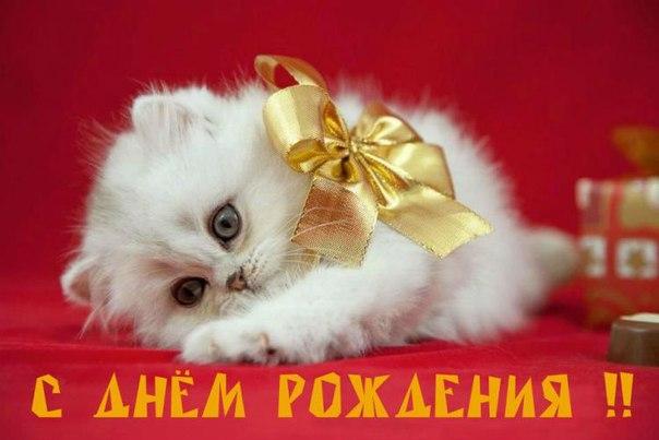 Поздравления с днем рождения с котиком 52
