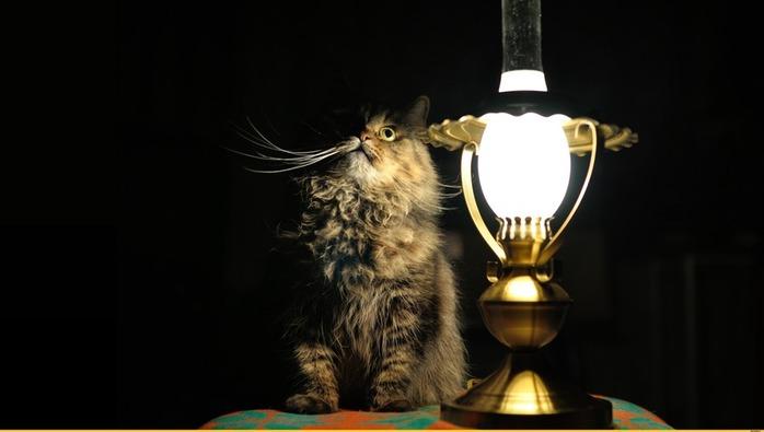 охуительные-истории-кошка-живность-лампа-961072 (700x395, 41Kb)