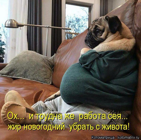 kotomatritsa_P (600x597, 315Kb)