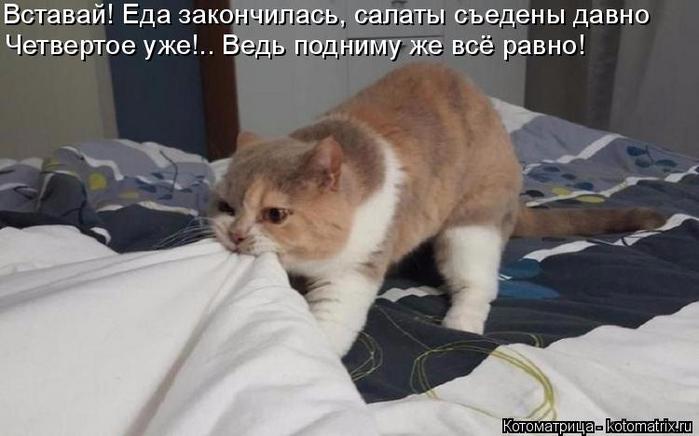kotomatritsa_v (700x436, 216Kb)