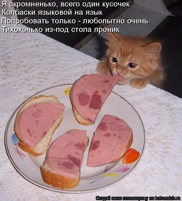 kotomatritsa_v9 (631x700, 371Kb)