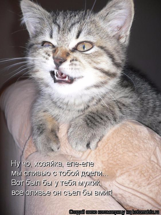 kotomatritsa_x_ (524x700, 344Kb)