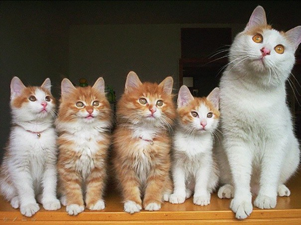 proud-cat-mommies-281__605 (605x453, 216Kb)