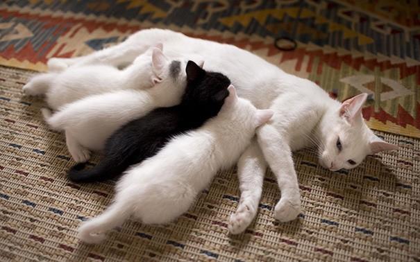 proud-cat-mommies-401__605 (605x378, 200Kb)