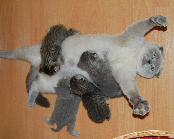 proud-cat-mommies__605 (605x486, 215Kb)