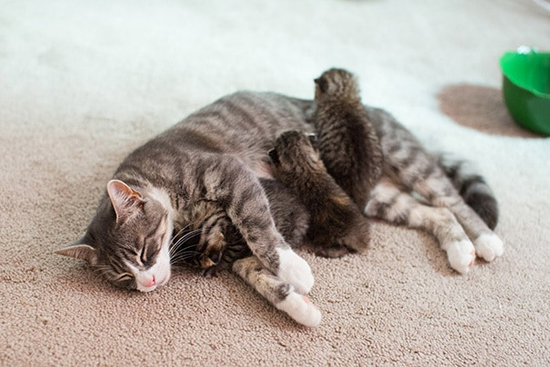 proud-cat-mommies-26__605 (605x404, 176Kb)