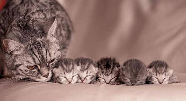 proud-cat-mommies-45__605 (605x330, 117Kb)
