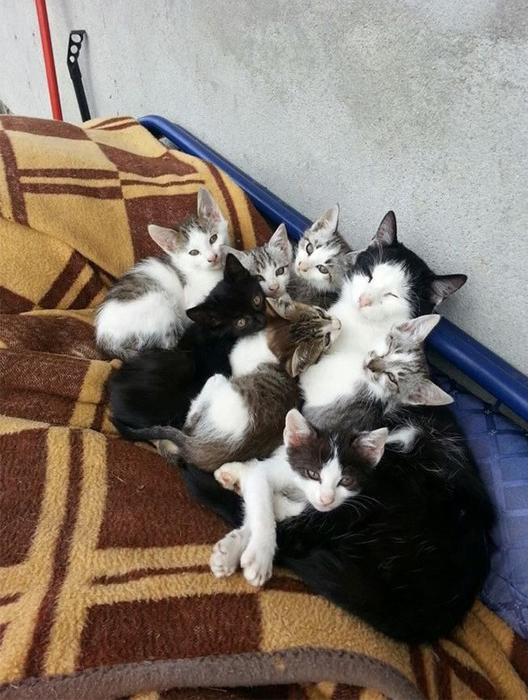 proud-cat-mommies-331__605 (528x700, 355Kb)