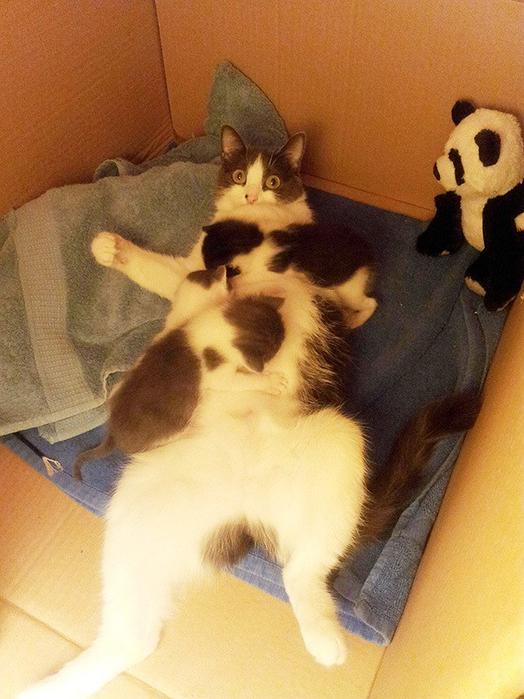 proud-cat-mommies-33__605 (524x700, 384Kb)