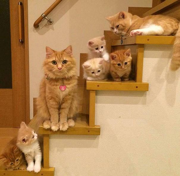 proud-cat-mommies-46__605 (605x589, 253Kb)