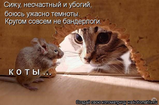 kotomatritsa_A (614x409, 188Kb)
