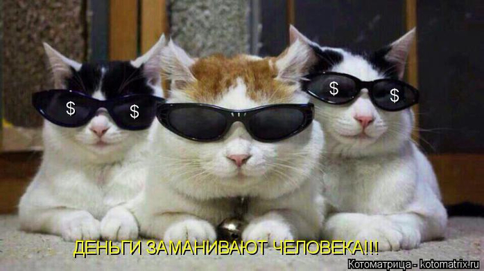 kotomatritsa_AB (700x392, 257Kb)