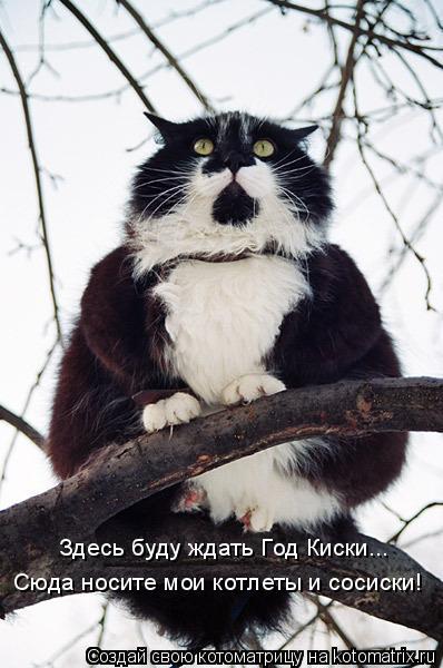 kotomatritsa_E (2) (398x600, 150Kb)