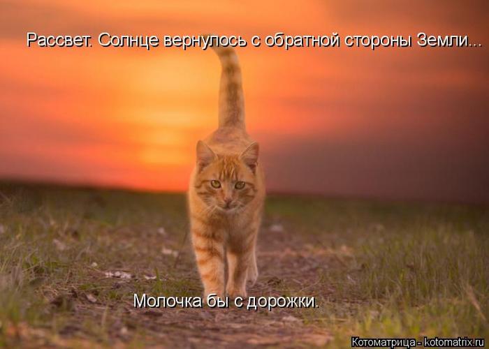 kotomatritsa_l (3) (700x500, 287Kb)