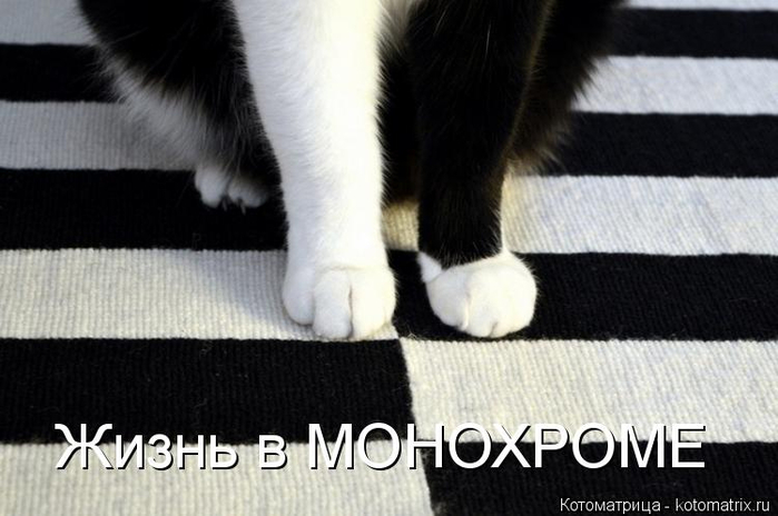 kotomatritsa_Lv (700x464, 222Kb)
