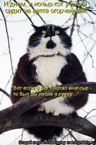 kotomatritsa_n (398x600, 191Kb)