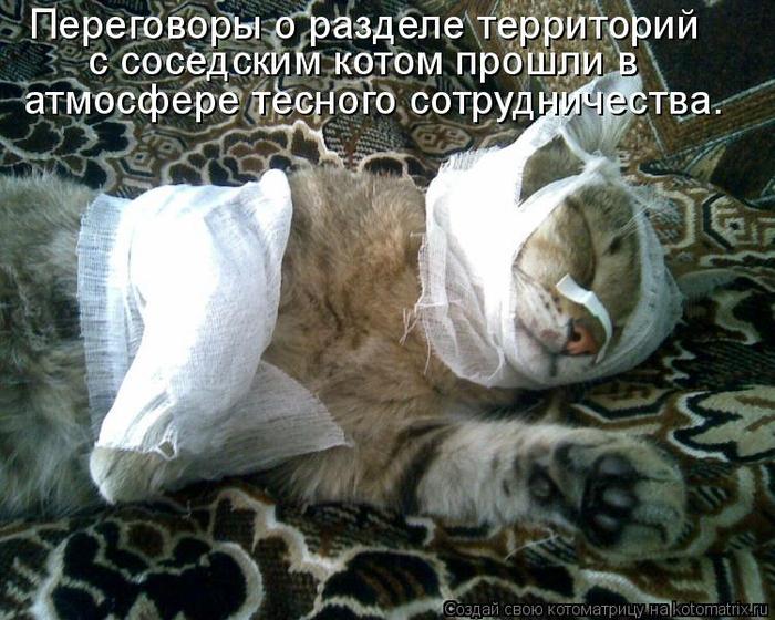 kotomatritsa_O (700x560, 437Kb)