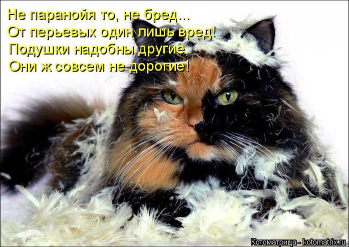 kotomatritsa_q2 (700x494, 370Kb)