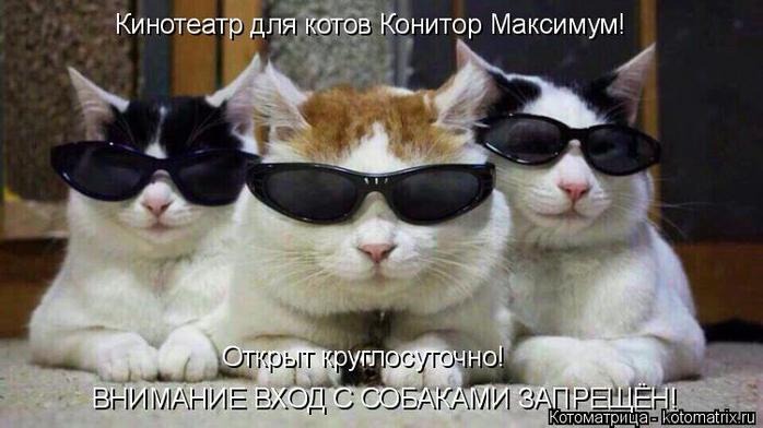 kotomatritsa_S (1) (700x392, 261Kb)