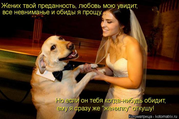kotomatritsa_v (700x466, 343Kb)