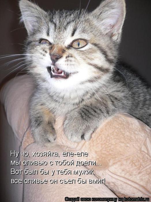 kotomatritsa_x_ (524x700, 334Kb)
