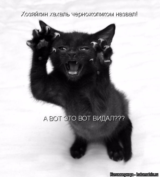 kotomatritsa_1_ (630x700, 178Kb)