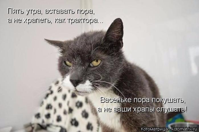 kotomatritsa_7L (700x464, 194Kb)