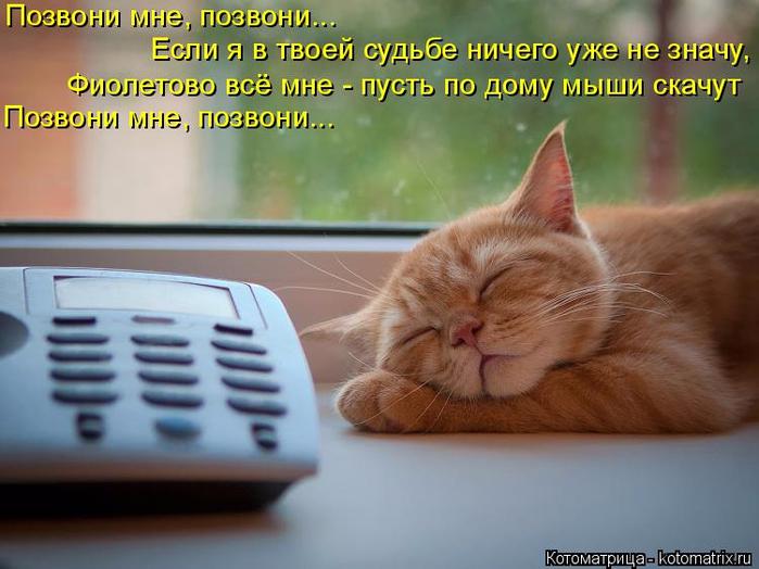 kotomatritsa_fB (700x524, 335Kb)
