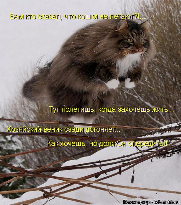 kotomatritsa_H (617x700, 448Kb)