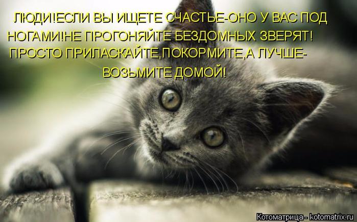 kotomatritsa_L (700x436, 317Kb)