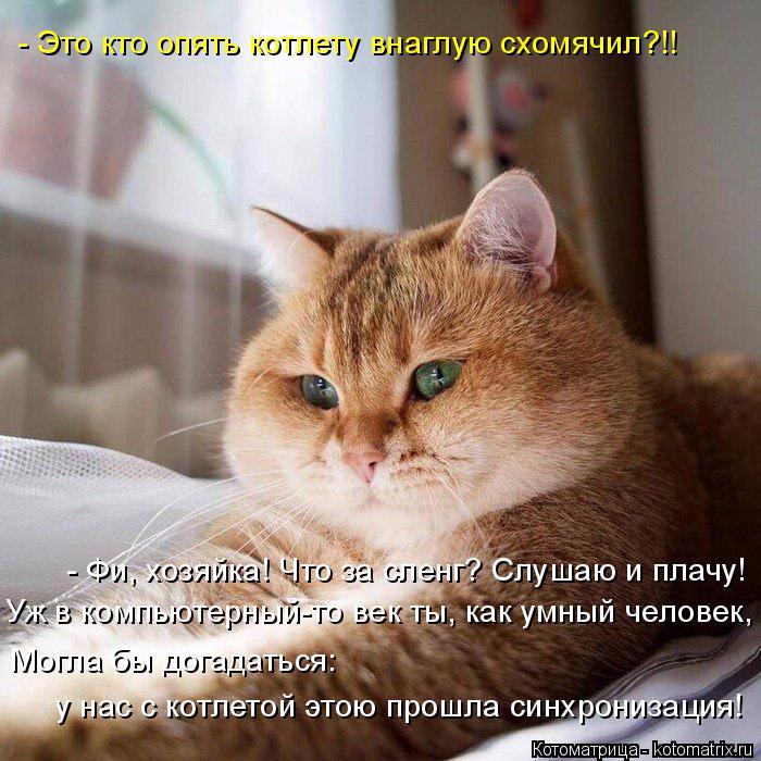 kotomatritsa_R (700x700, 402Kb)