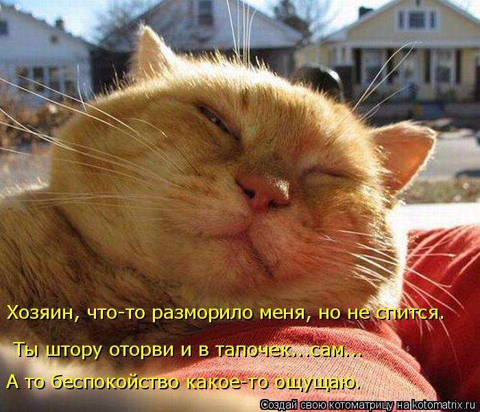 kotomatritsa_yO (700x601, 376Kb)