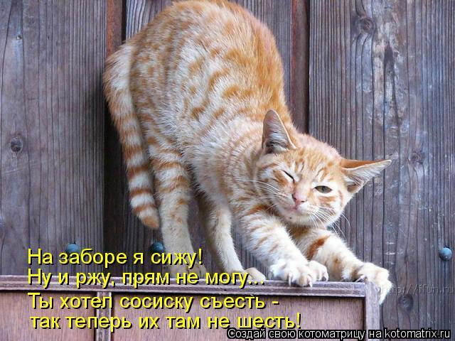 kotomatritsa__ (640x480, 268Kb)