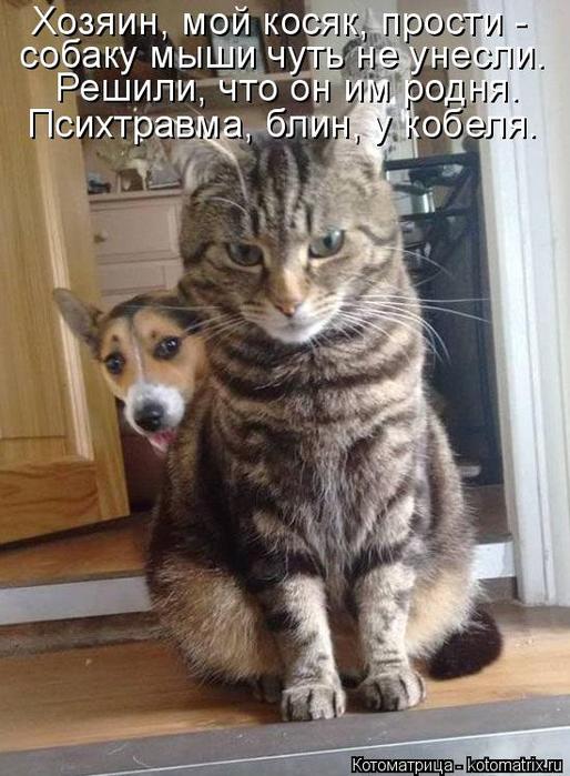 kotomatritsa_6 (514x700, 338Kb)