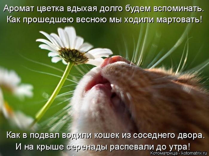 kotomatritsa_a (700x522, 348Kb)