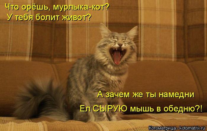 kotomatritsa_B (700x444, 308Kb)