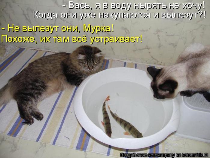 kotomatritsa_Dq (700x524, 326Kb)