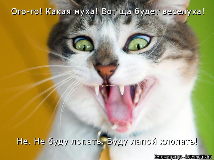 kotomatritsa_Hk (700x524, 279Kb)