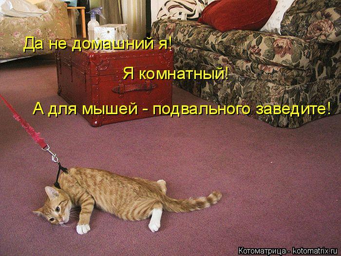 kotomatritsa_l (700x525, 333Kb)