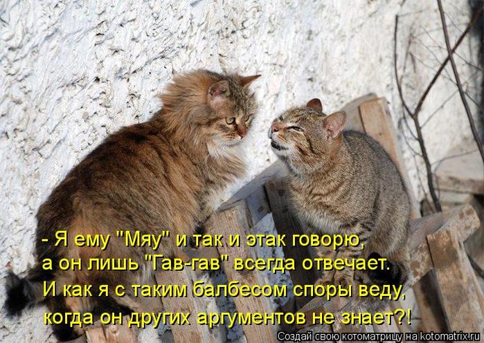 kotomatritsa_V (700x496, 458Kb)
